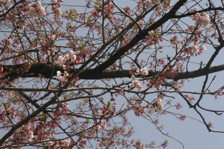 003-no-blossoms.jpg