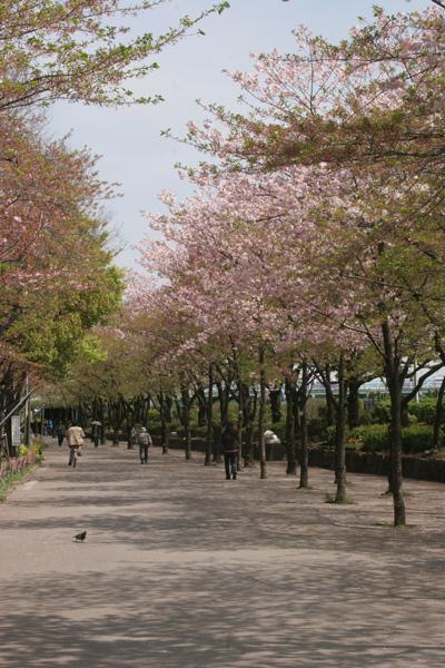 004-no-blossoms.jpg