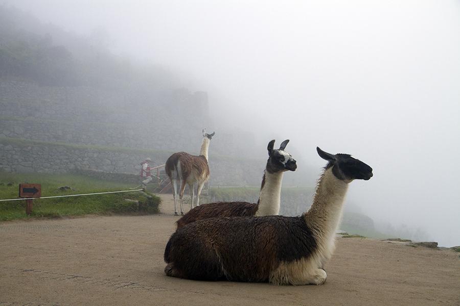 PeruBlog153