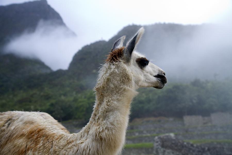 PeruBlog154