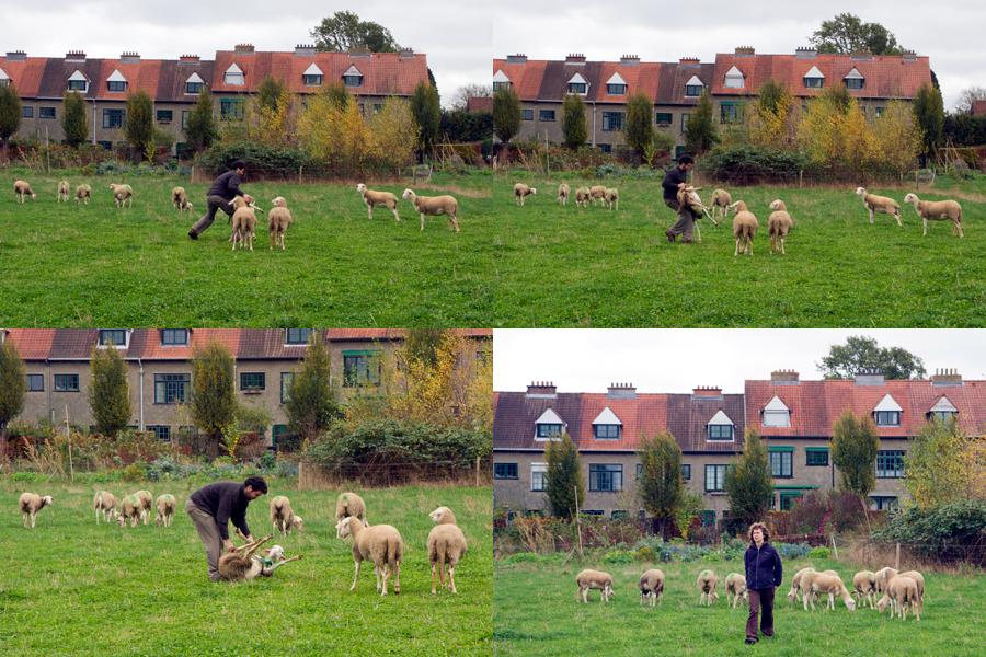 SheepBlog03