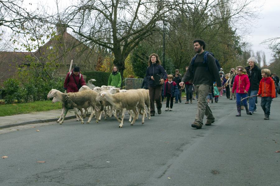 SheepBlog06