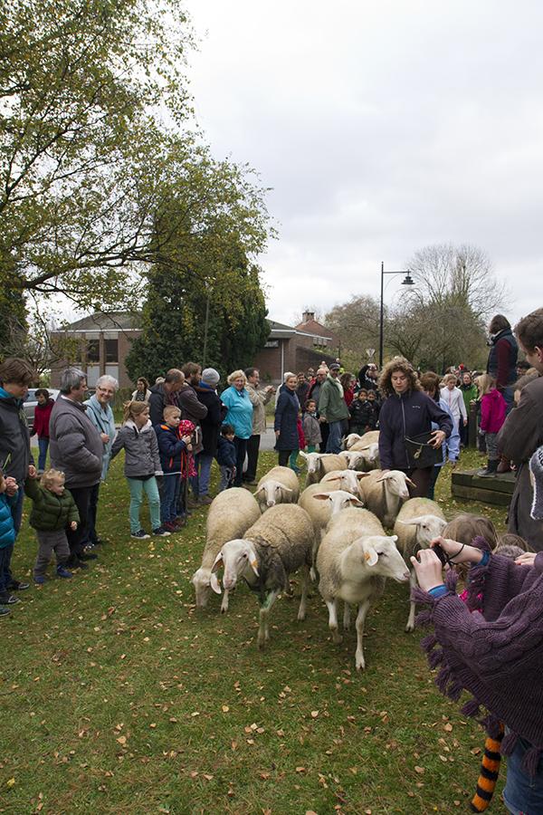 SheepBlog07